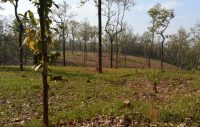 Mapping Forest Degradation in Nepal with Remote Sensing